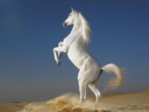 White_Horse-500x375
